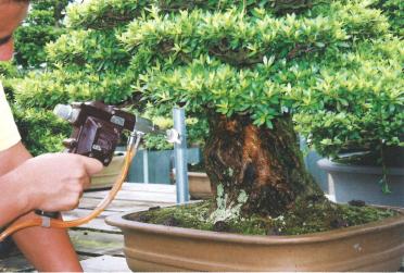 サツキ幹洗浄は盆栽・水石用スプレーガン使用例