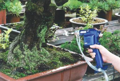 五葉松の幹洗浄は盆栽・水石用スプレーガン使用例