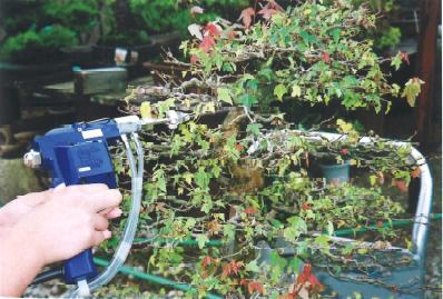 カエデ小枝洗浄は盆栽・水石用スプレーガン使用例